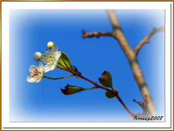El despertar de la primavera - the awakening of the spring - image gratuit #277957
