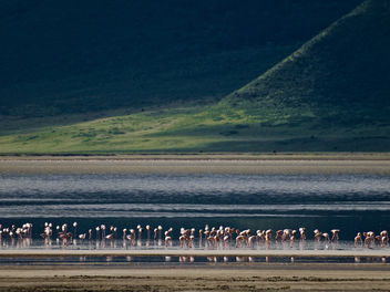 Flamingoes in the Ngorongoro Crater - бесплатный image #278217