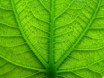 Green as a leaf - image #278367 gratis