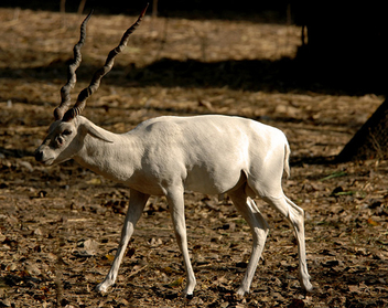The name is Buck, White Buck - image gratuit #278397