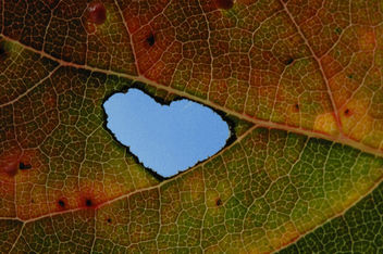 Heart in Leaf 021 - Free image #278687