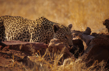 Namibia. mazzaliarmadi.it wildlife - Free image #278707
