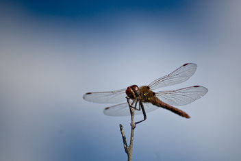 Sky Bokeh with Dragonfly - Free image #278957