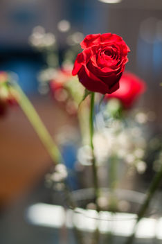 Roses for the performer - Free image #279437
