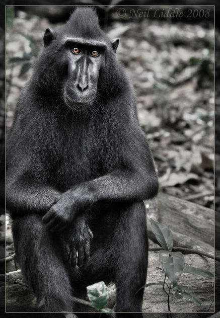 Casual Macaque - Free image #279537
