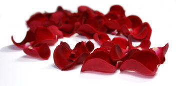 Flowers 8_Red_Rose_Petals - Free image #279737