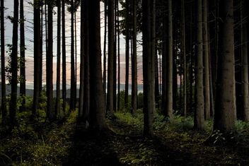 nightly forest I - image gratuit #280177
