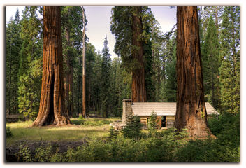 Secuoyas gigantes, giant sequoias. - бесплатный image #280547