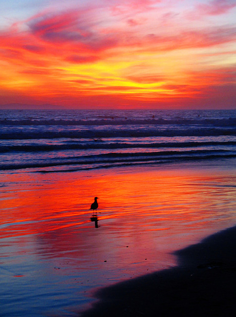 Sunset on Huntington Beach, California, Pacific Ocean - image gratuit #280557