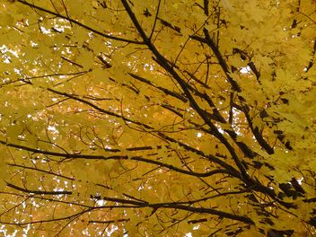 Branches with Yellow Leaves - Kostenloses image #280947