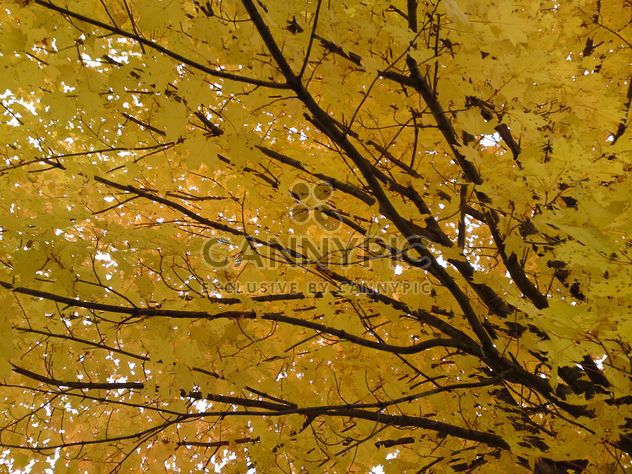 Branches with Yellow Leaves - бесплатный image #280947