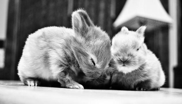 Baby bunnies - Free image #281407