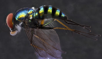 Fly with ink, U,side_2012-12-12-14.35.20 ZS PMax - Free image #281627