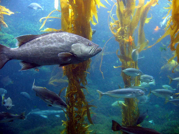 Ocean Life Kelp Forest - Free image #282387