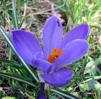 first visit in spring 2010 - Free image #284127