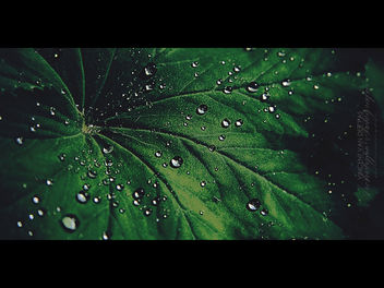 Drops on Leaf - Free image #284297