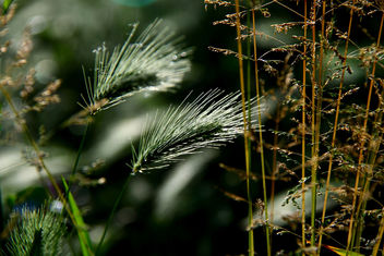 Nature in the weeds - Free image #284377