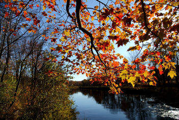 Fall tree branch leaves along river - image #285507 gratis