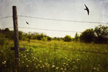 Another Meadow Moment - image gratuit #286457
