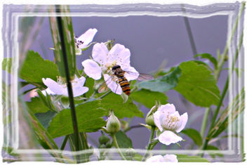 ~~ Delighting of Nectar by Water ~~ - Free image #286667