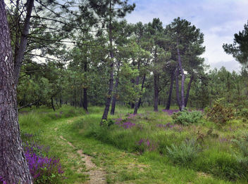 Path In To French Forest - image gratuit #286797