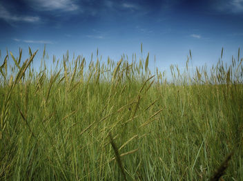 Peering Through The Long Grass - image gratuit #286807