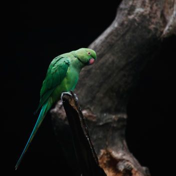 Parrot!!! - Free image #287037