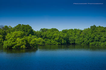 Forest at the estuary of a river... - бесплатный image #287247