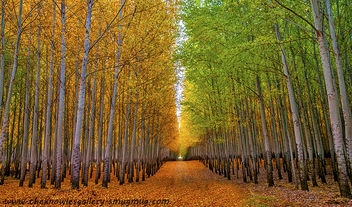 Autumn Tree Farm and road - Free image #287317