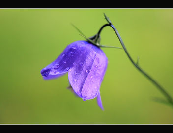 A little blue bell - image #287407 gratis