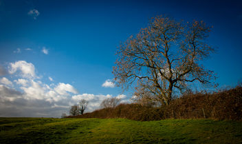 Looking up to the sky - image gratuit #287647