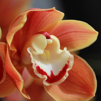 Orchidee... - Free image #287867