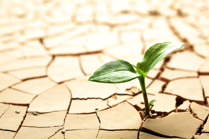 Plant in dried cracked mud - image gratuit #288467