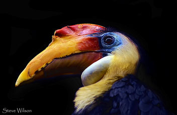 Colourful Hornbill - image #288907 gratis