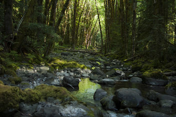 temperate rainforest - image gratuit #288917