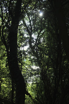 Lost in a forrest - Free image #289057