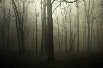 Can't See the Forest for the Trees - Free image #289977