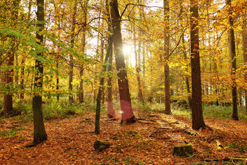 Autumn, Bones Wood - Free image #290147