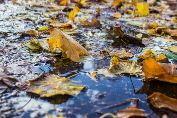 Autumn pavement - Free image #290417
