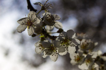 Spring is here - Free image #291077