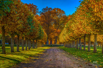Fall trees at Ulriksdals Slott - Free image #291257