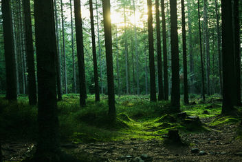 Forest landscape with trees - image #291697 gratis