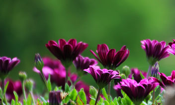 Beautiful purple - image gratuit #292847