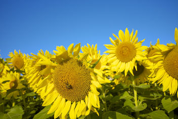 You are my sunshine! My only sunshine ..... - Free image #293377