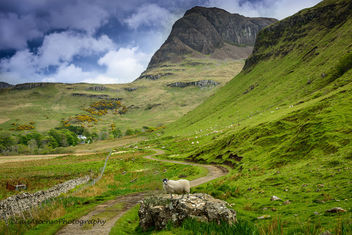 A sheep in Skye - image #293537 gratis