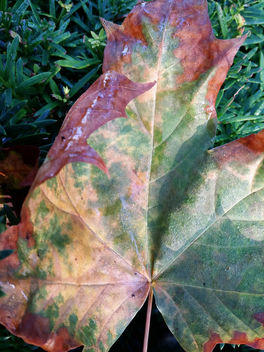 Autumn leaf - Free image #293847