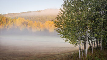 Morning mist - image gratuit #294037
