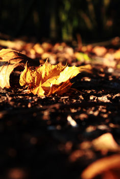 Autumn foliage - Free image #294247