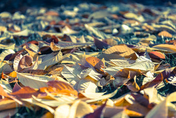 Fall, Leaves & Colors - Kostenloses image #294387
