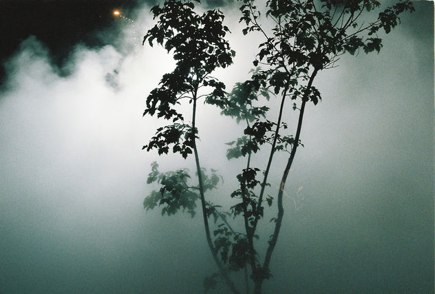 Human created fog with a breaze of nature. - Free image #294497